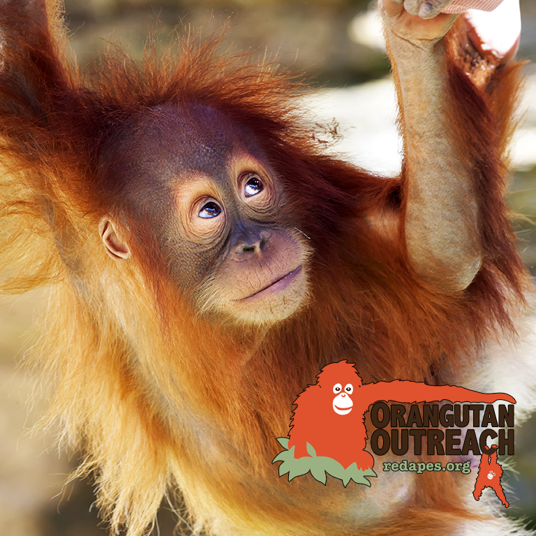 Charity - Orangutan Outreach
